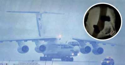 Lumipyry toi pandat Suomeen – erikoislento Kiinasta otettiin vastaan kuin valtiovierailu