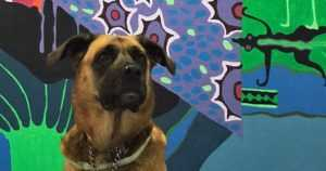 Finlayson Art Area -taidetapahtumaan pääsevät myös koirakaverit – kunhan käyttäytyy kiltisti
