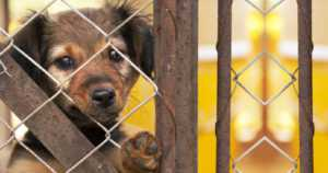 Nainen salakuljetti satoja koiranpentuja Suomeen – moni kuoli pian virussairauteen