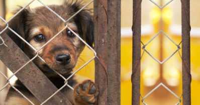 Ilmoituksia eläinten huonosta kohtelusta aikaisempaa enemmän – koirakäynnit lisääntyivät eniten