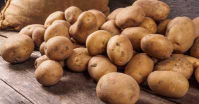 Syökää perunaa ja viljaa, niitä riittää vientiinkin!