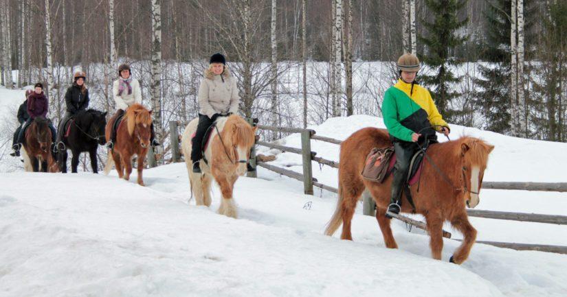 Ratsastusta issikoilla Kolin kansallispuiston läheisyydessä.