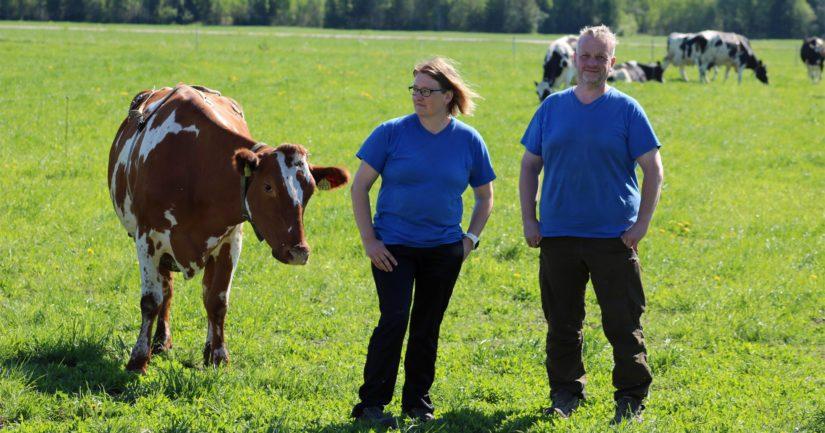 """Tila, jossa ei säästellä työtunteja – """"Karjanhoito on unelma-ammattimme"""""""
