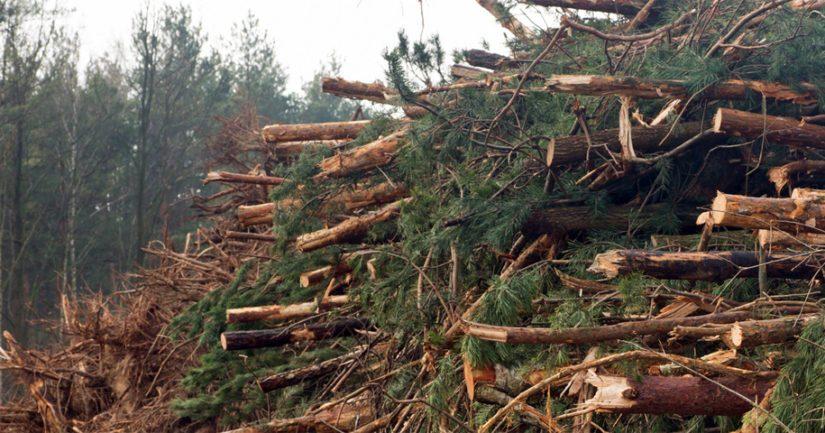 Harvinainen työtapaturma – kaksi metsätyömiestä loukkaantui vakavasti toistensa raivaussahoista
