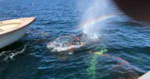 Lotta-valas jäi jälleen kiinni rysään – valas jatkoi matkaansa hyväkuntoisena päästyään vapaaksi