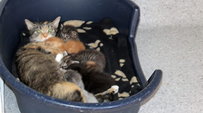 Raahen Eläinsuojeluyhdistyksen kautta kodittomat kissat saavat erinomaiset lähtökohdat uuteen elämään.