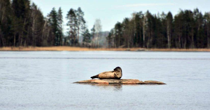 Esitetty maailmanperintökohde sijaitsee Saimaalla, Suomen suurimmalla järvellä.