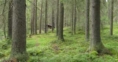 Suomen 100 luontohelmeä -hanke on innostanut kuntia suojelutoimiin