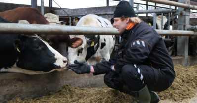 """Maatilan karjanpito alkoi täysin alkeista – """"Kun on kiinnostusta, kaikki on mahdollista"""""""