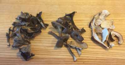 Kastike on sienisalaatissa avain kaikkeen – totuttelua sieniin, osa 2
