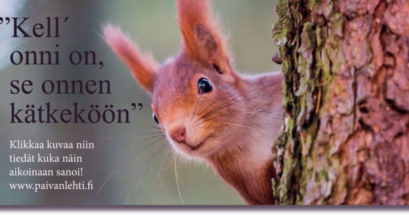 Oravan suurin aarre on mittava käpyvarasto talven varalle. Aarteensa se kätkee joskus niin hyvin, ettei itsekään sitä löydä.