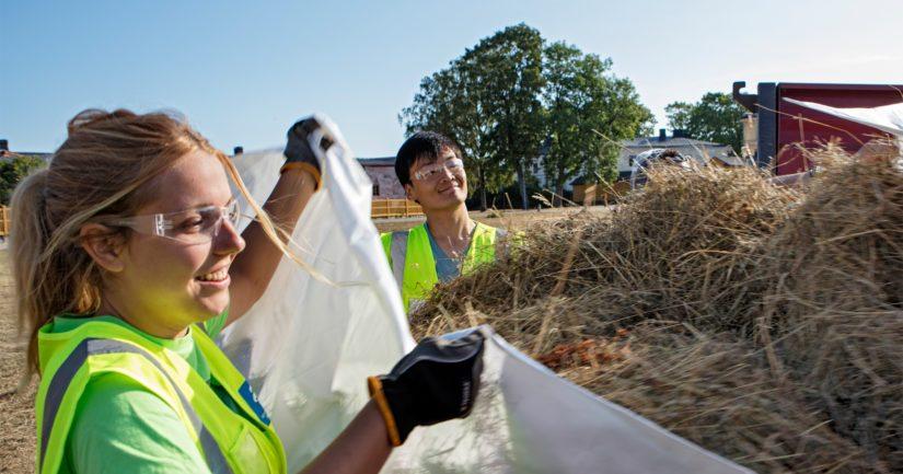 Suomenlinnassa hoidetaan niittyalueita, torjutaan vieraslajeja ja kunnostetaan linnoitusrakenteita.