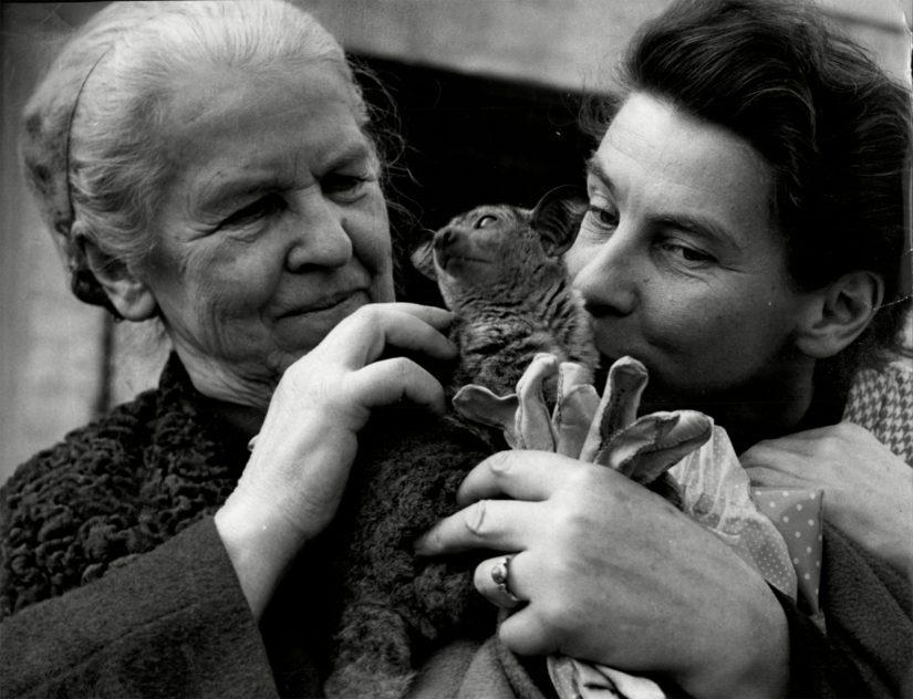Toven ja hänen äitinsä Hamin suhde oli tiivis, Ham oli esikuva Kesäkirjan isoäidille.