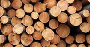 Kotimaisen raakapuun käyttö oli viime vuonna huippulukemissa