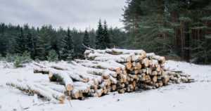 Metsähallitus arvioi valtion metsien lumituhoja – metsiin jää nyt runsaasti lahopuuta