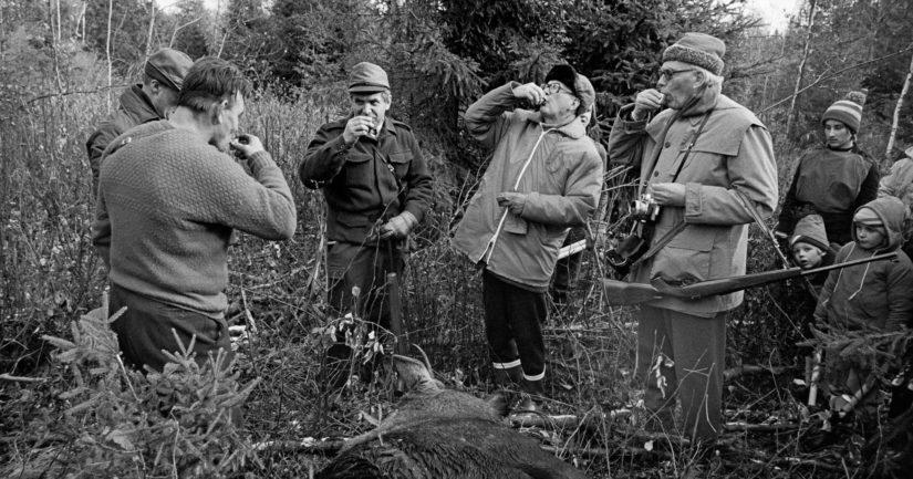 Presidentti Urho Kekkosen metsästysseurue ottaa kaatoryypyn Sipoon Östersundomissa 16.10.1976.