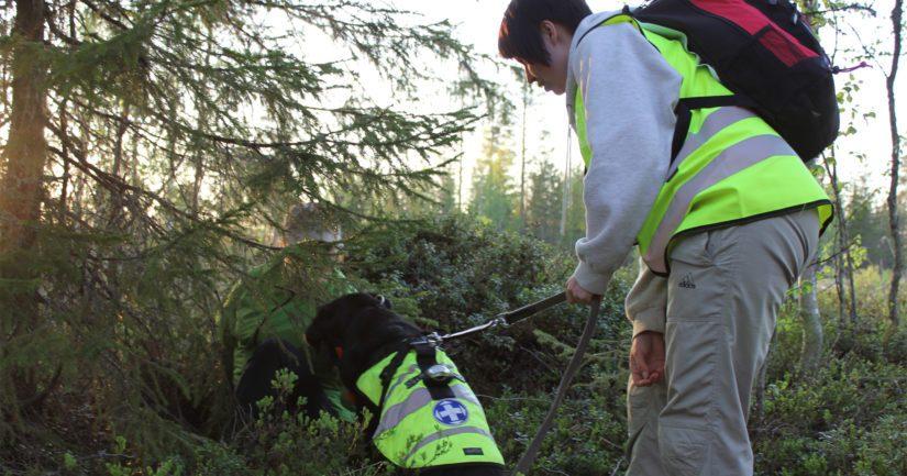 Kadonnutta esittänyt löytyi Taivalkosken etsintäharjoituksessa Marika Tiermaksen ja Moona-koiran yhteistyöllä.