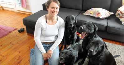 Labradorinnoutajilla on vahva työmotivaatio – homekoirasta ensimmäiseksi räjähdekoiraksi