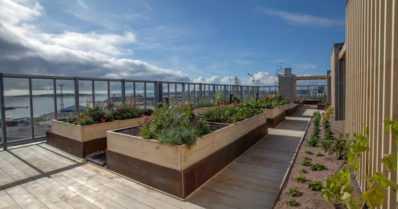 Asukkaat voivat kasvattaa vihanneksia ja yrttejä – kerrostalon katolla viherpuutarhassa