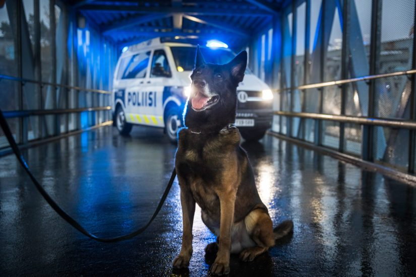 Vuoden poliisikoira 2020 Vinha.