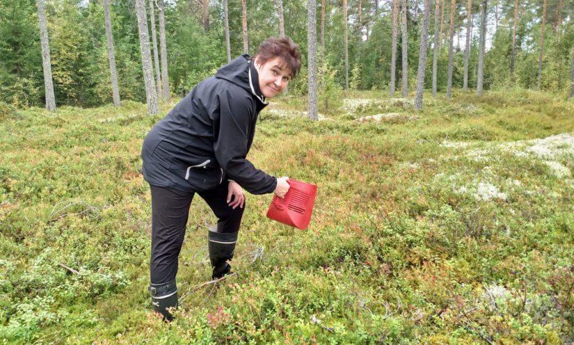 Ahkerana marjastajana tunnettu Virpi Tuulas poimii metsämarjoja nykyisin tilauksesta. – Minulla on tutut vakioasiakkaat, joille toimitan marjoja vuodesta toiseen.